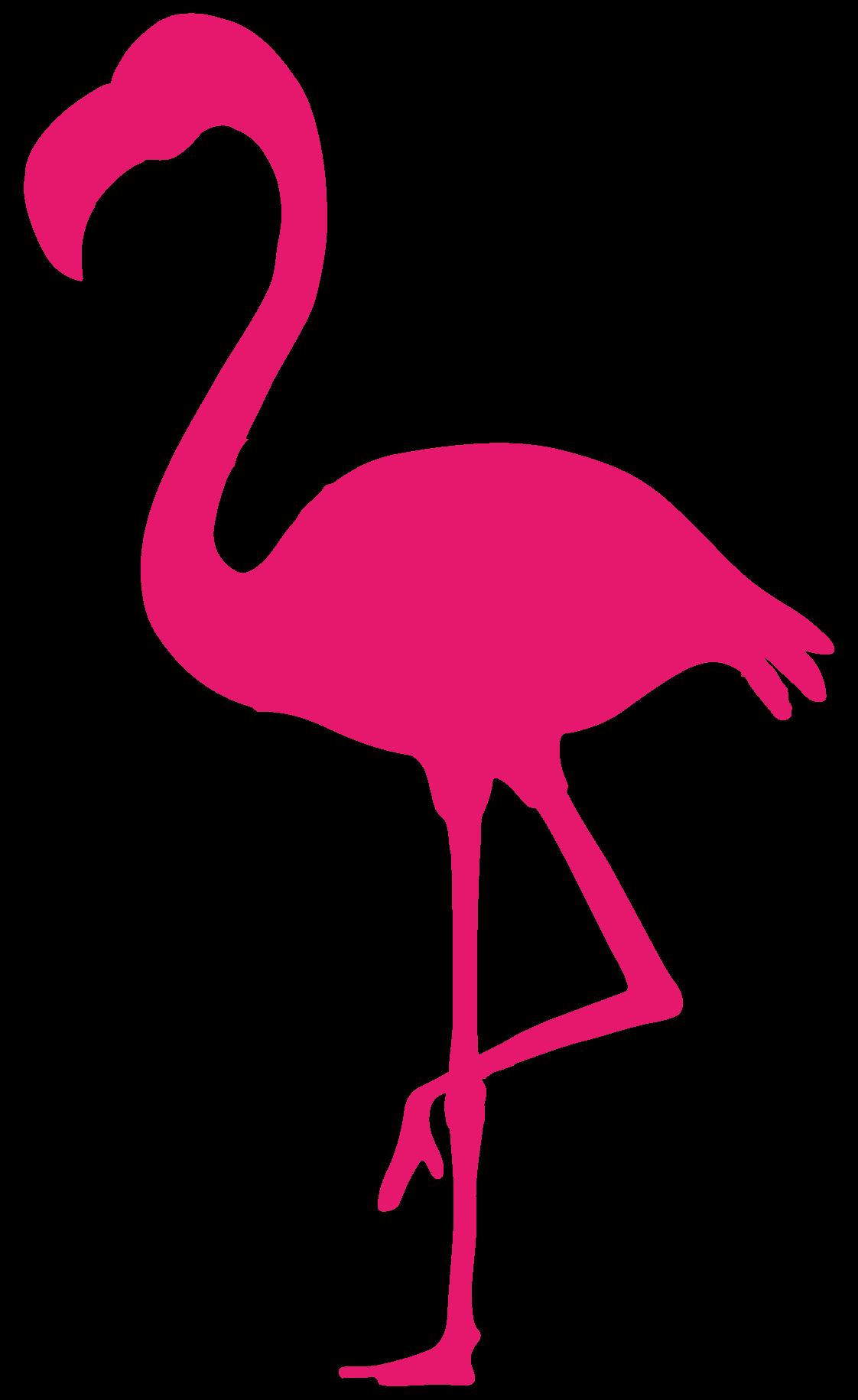 Pink Bird Video